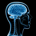 Otak tidak Sensitif Terhadap Rasa Sakit